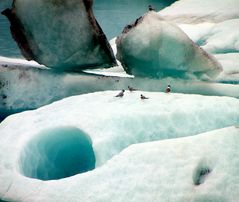 EisVögel