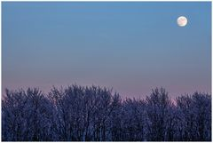 Eiswinter im Mondwald... (2. der Serie: Früher gab´s Winter...)