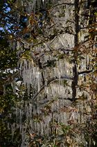 Eiszapfen im Baum