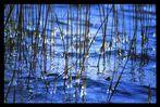 Eiszauber am Ufer