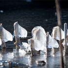 Eiszeit (1)