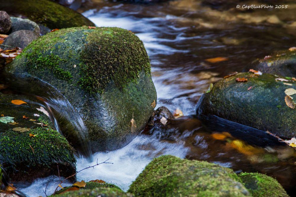Eiszeitliche Findlinge mit Moos bedeckt