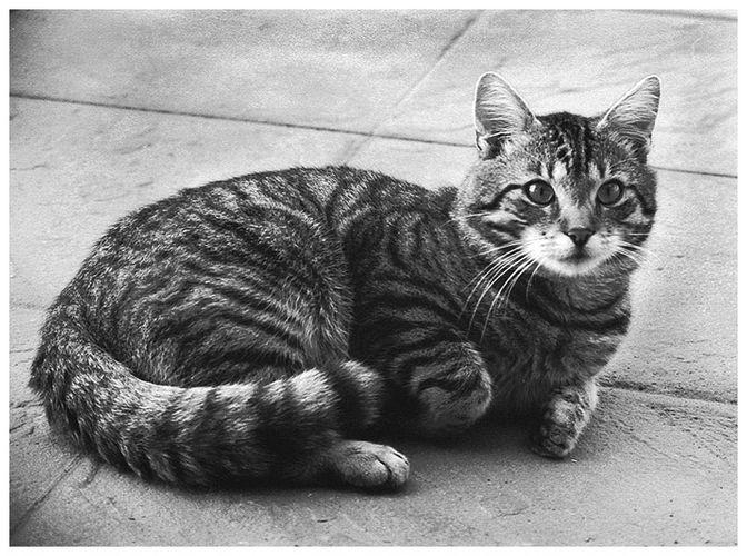 Eitelkeit, dein Name ist Katze