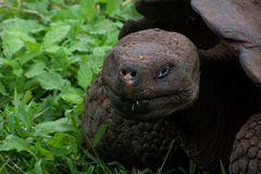 """EITI"" auf  Galapagos"