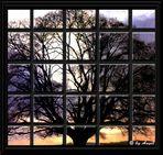 El árbol...