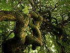 ...el árbol de la...vida...