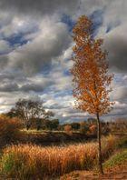 El árbol y el otoño