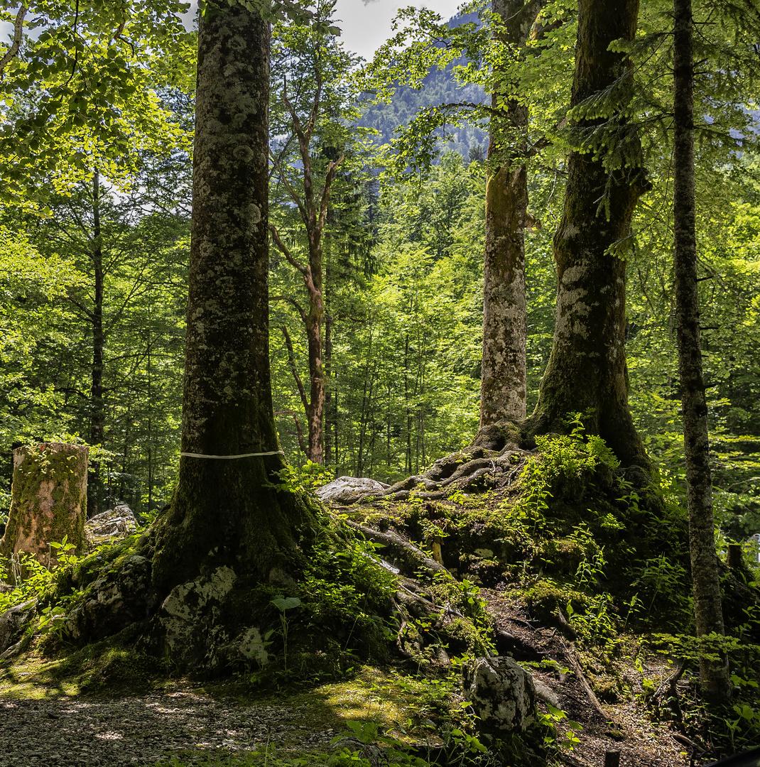 El bosque de Savica Waterfall