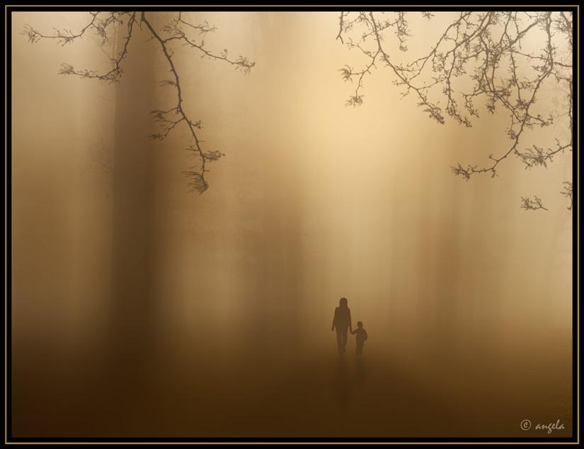 El bosque en la bruma