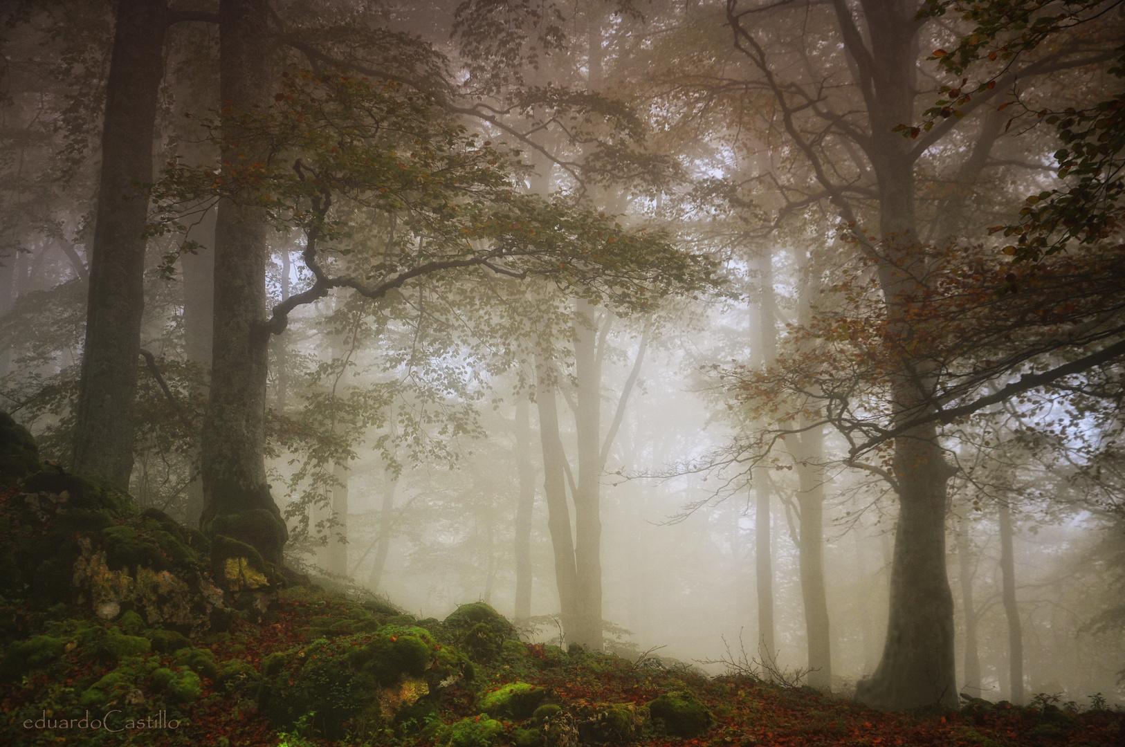 El bosque eterno