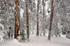 El bosque helado