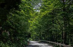 El camino verde