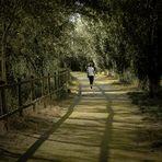...el camino...recorrido...