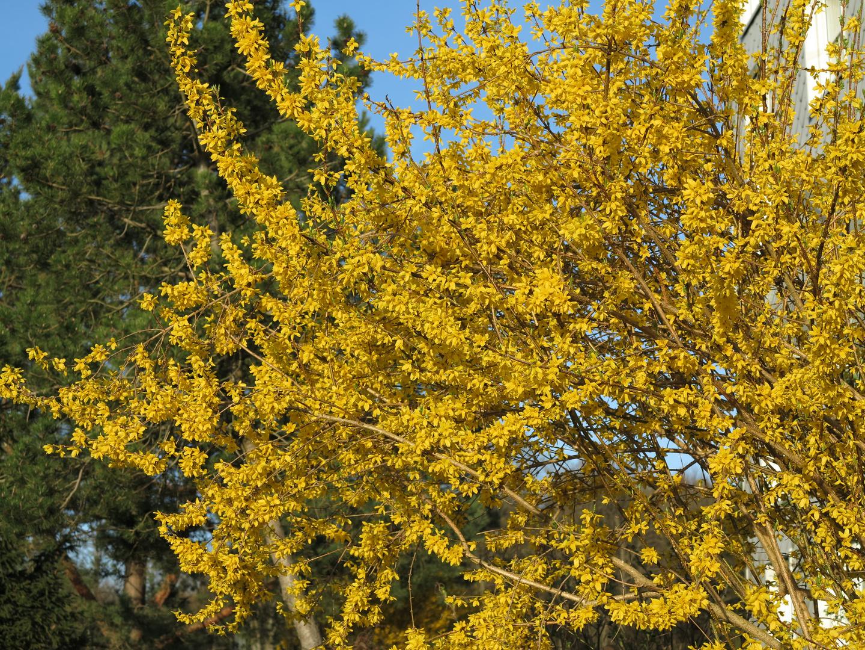 El color de la primavera