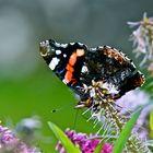 El color de las mariposas