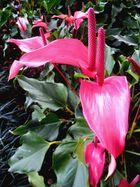 El color de mi flor