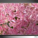 El color rosa...2