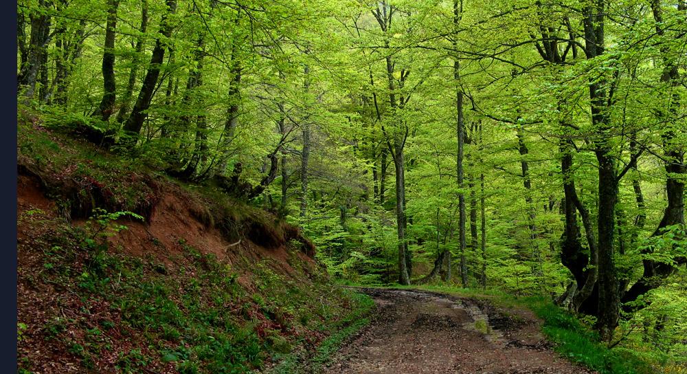 El encanto del verde