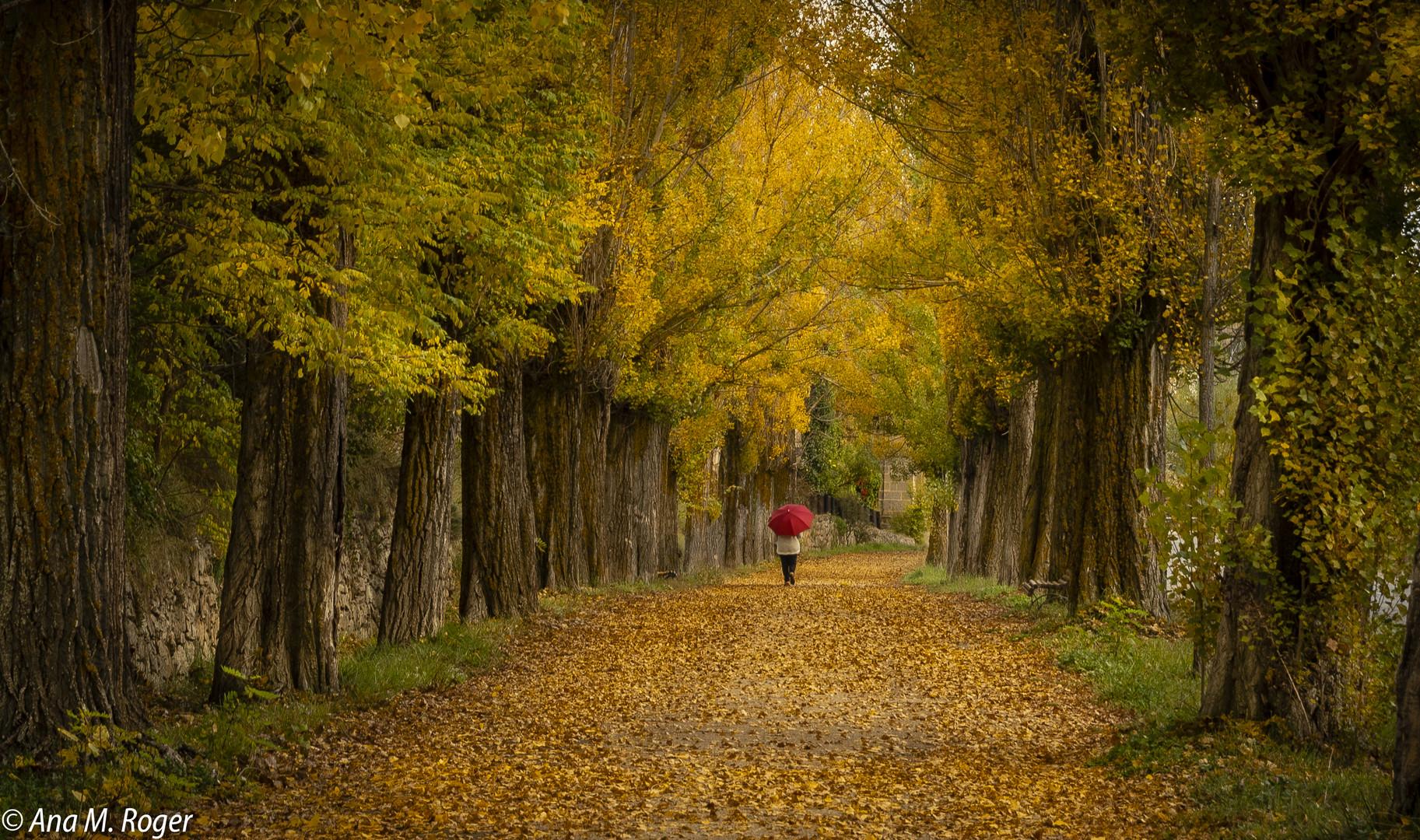 El final del otoño....