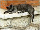 el gat@ durmiente..