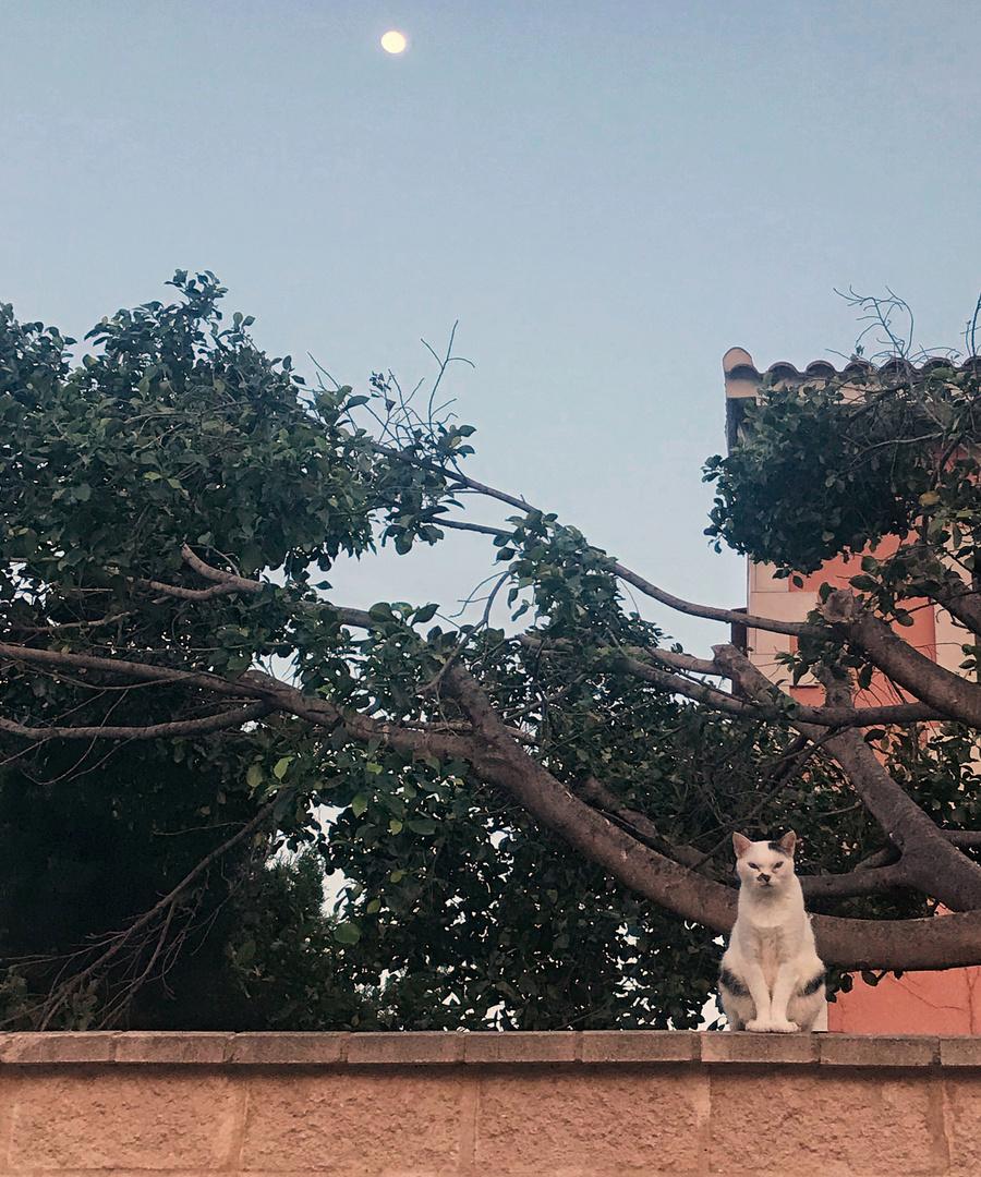 El gato al filo.