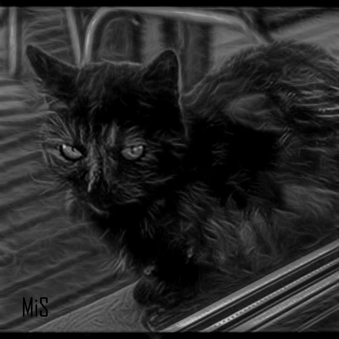 El gato con fractalius