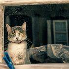 El gato curioso