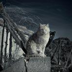 """"""" El gato de dos cabezas y guardaespaldas """""""