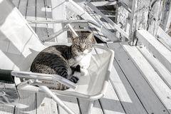 El gato de la playa