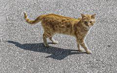 El gato de Ston - I