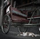 """El gato del chino"""