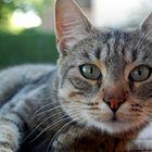 el gato del horno