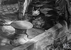 El gato en el techo de zinc caliente