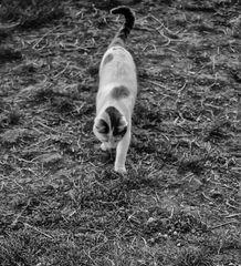 El gato y la salamandra: el escape...