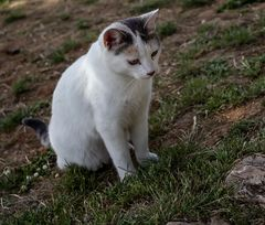 El gato y la salamandra: la desilusión...