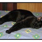 El Gordo durmiente