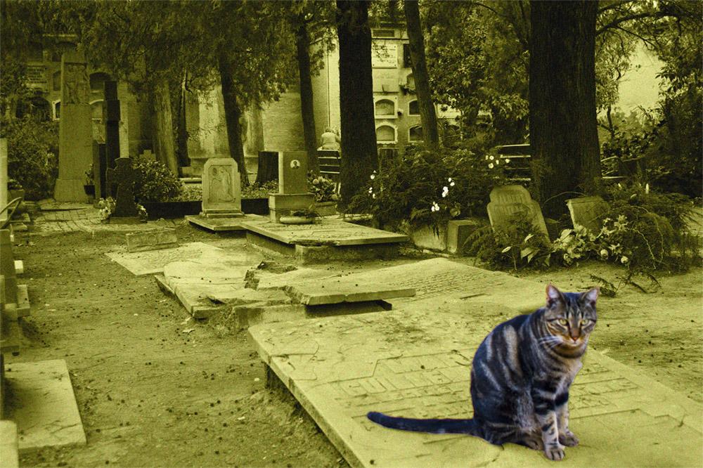 El guardian de las flores (El gato de Schrödinger)