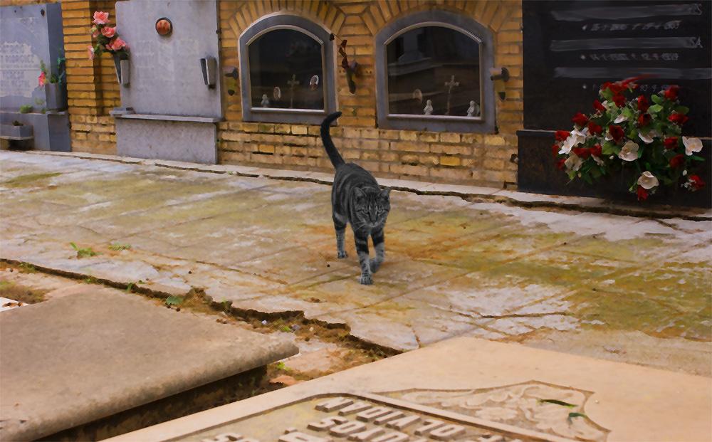 El guardian de las flores II (el gato de Schrödinger II)