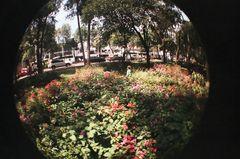 El jardín de las bugambilias