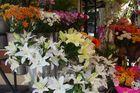 el kiosco de las flores
