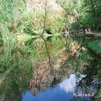 el lago de los espejos