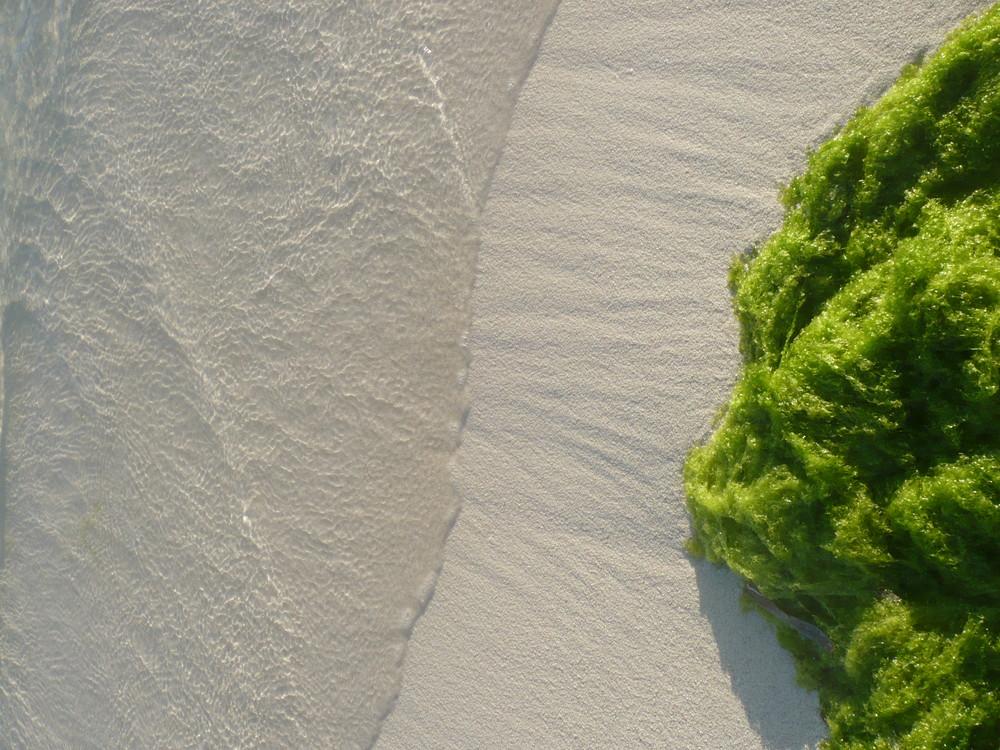 El Mar Verde