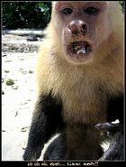 el mono loco