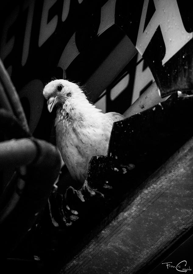 El pájaro mendigo