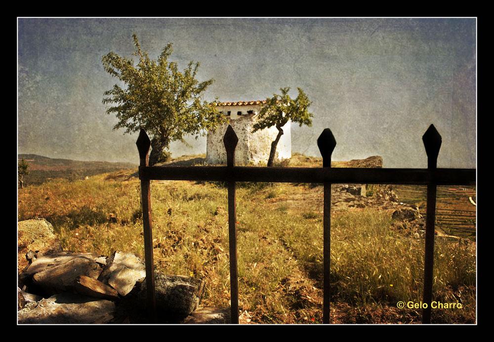 El palomar ( Para Amado Calvo y Tessa)