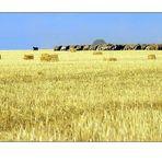 El pastor i el seu ramat - The shepherd and his flock