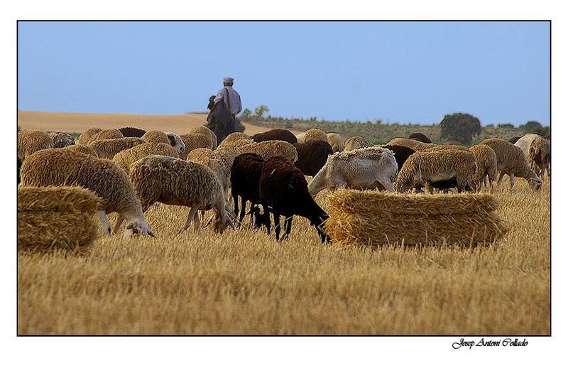 El pastor - The shepherd