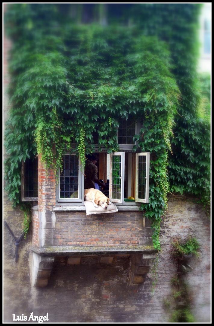 el Perro de Brujas ( Belgica)