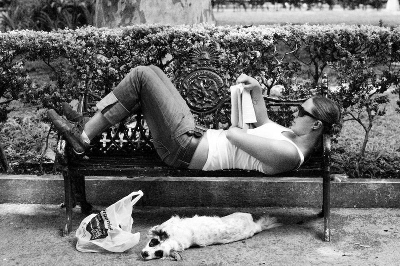 El perro y la dama