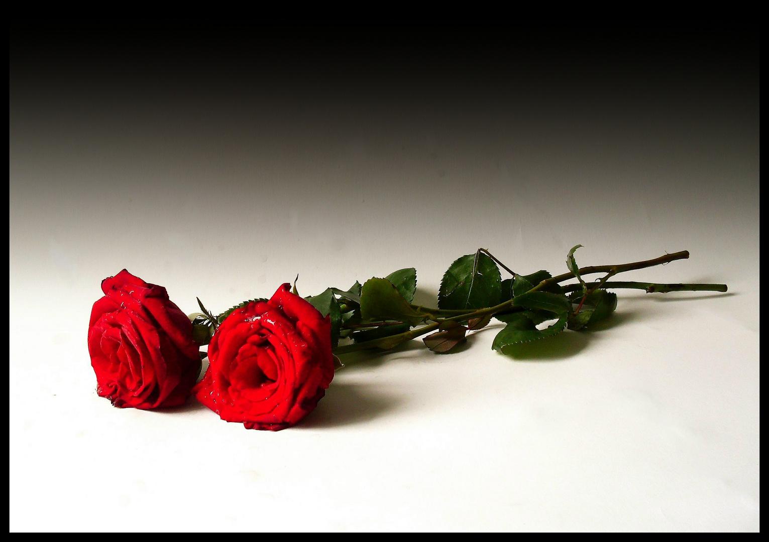 El Poder de las rosas